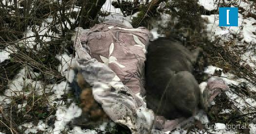 Трупы собак, за кремацию которых заплатили хозяева, нашли в лесу под Лосино-Петровским - Похоронный портал