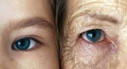 Старение и бессмертие