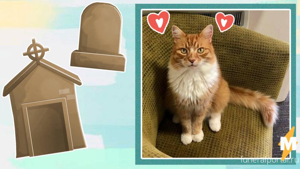 Кот сбежал из дома и удивил хозяев. Он нашёл себе работу на кладбище, и на такую решится не каждый человек