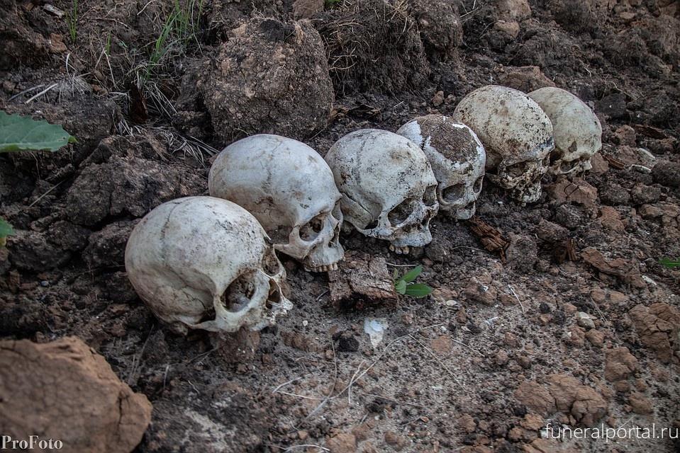 «Из обрыва торчат кости, вокруг - черепа»: еще одно кладбище на Волге размыло водой - Похоронный портал
