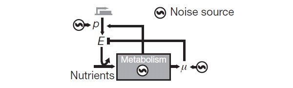 stochasticity_of_metabolism_fig3_600.jpg